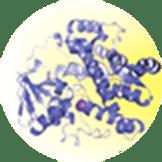 微生物の二次代謝産物の生合成に関する研究とその応用